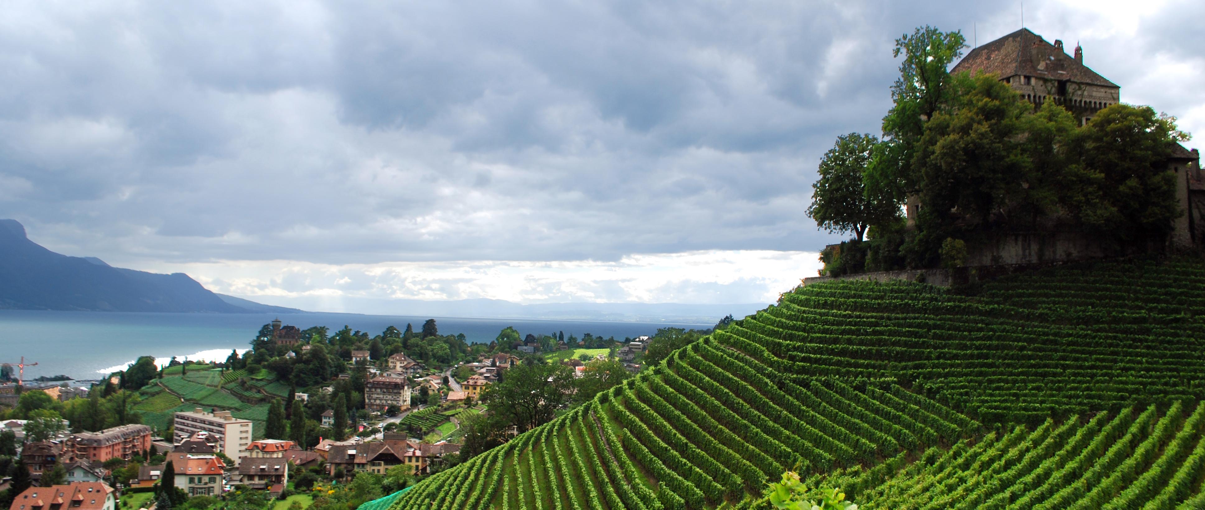Welche Schweizer Rebberge sind einen Ausflug wert?